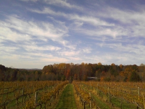 Hickory Hill Vineyards in Fall