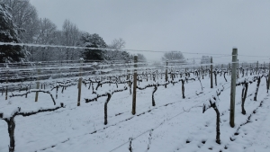 Hickory Hill Vineyards in Winter